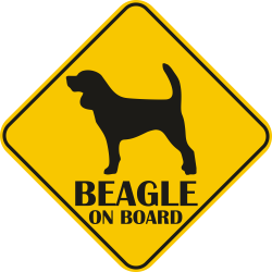 Sticker auto - Beagle
