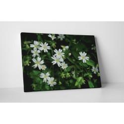 Floricele albe