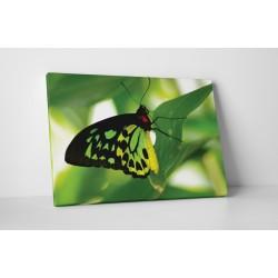 Fluture verde