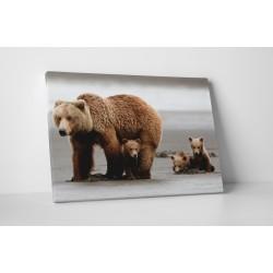 Familie de ursi