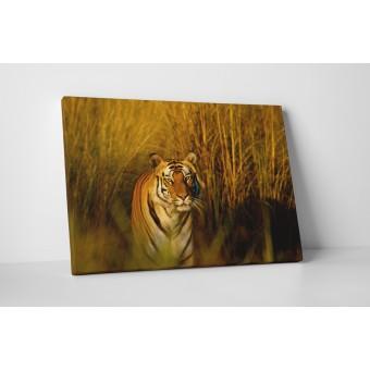Tigrul periculos