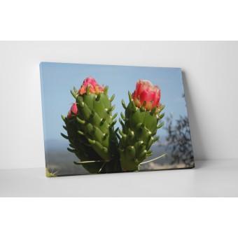 Cactus inflorit