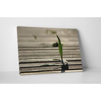 Un fir de iarba