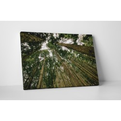 Copacii inalti