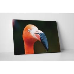 Portretul unui flamingo