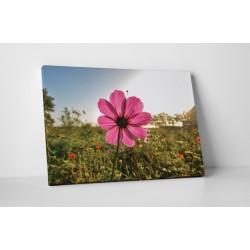 O floare roz