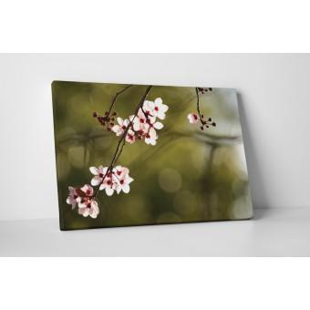 Floare de cires