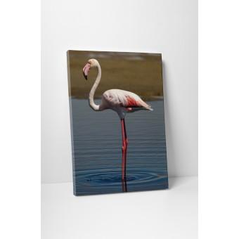 Flamingo singuratic