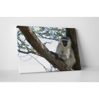 Maimuta pe copac