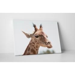 Girafa simpatica