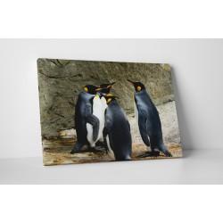 Intalnirea pinguinilor