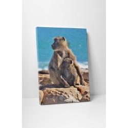Familie de maimute