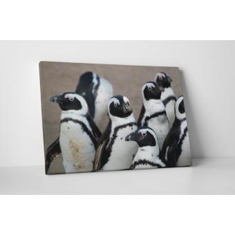 Grup de pinguini