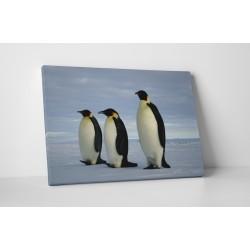 Trei pinguini