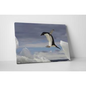 Pinguin zburator