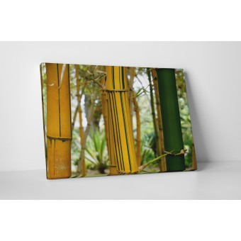Bambus cu dungi