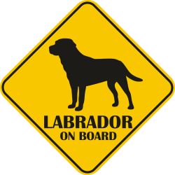 Sticker auto - Labrador