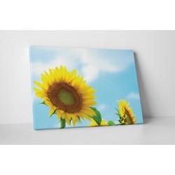 O floare, o raza de soare