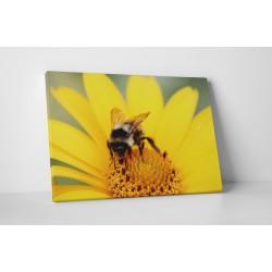 Albina la lucru