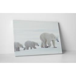Familie de ursi polari