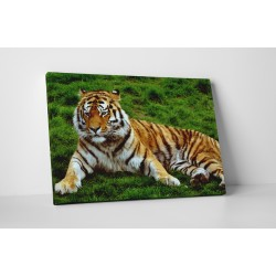 Tigrul obosit