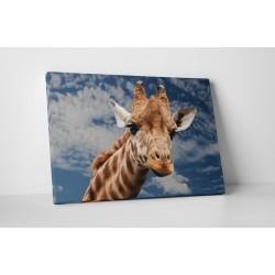 Girafa inalta