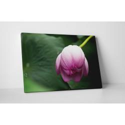 Boboc de floare mov