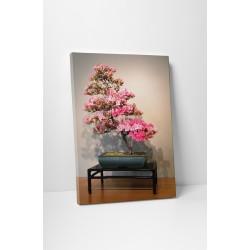 Azalea bonsai
