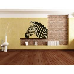Zebra frumoasa