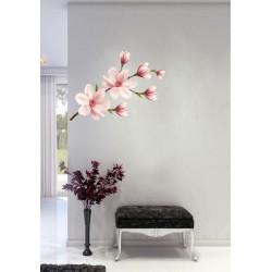 Magnolie multicolor